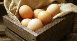 bir besin maddesi olan yumurta