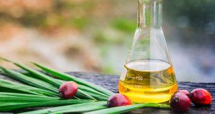 Palm Yağı Nedir? Kullanım Alanları ve Sağlık Üzerine Etkisi Nedir?