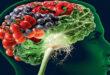 Alzheimer Hastalığı ve Antioksidan İlişkisi
