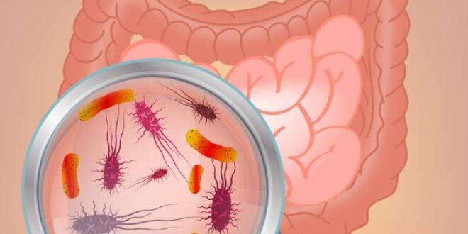 Nedir bu Probiyotik, Prebiyotik, Postbiyotik Meselesi?